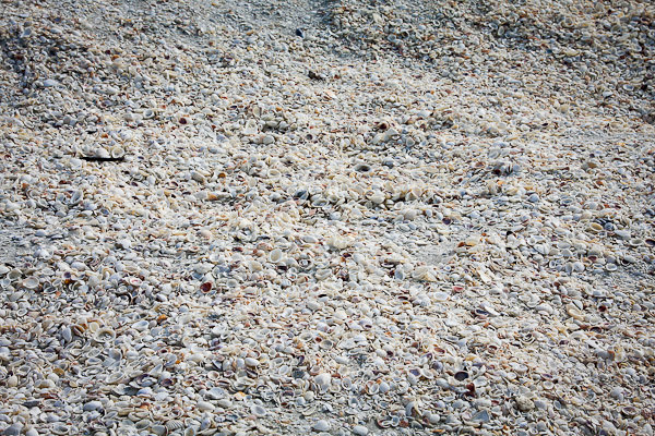 seashells, sanibel island