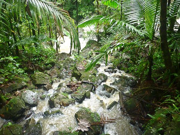 puerto rico, el yunque rainforest