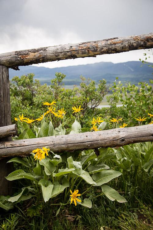 grand teton national park | the merry gourmet