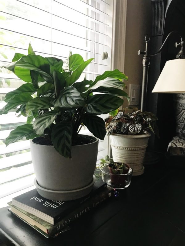 houseplants | merrygourmet